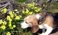 blinky stops to smell the flowers.